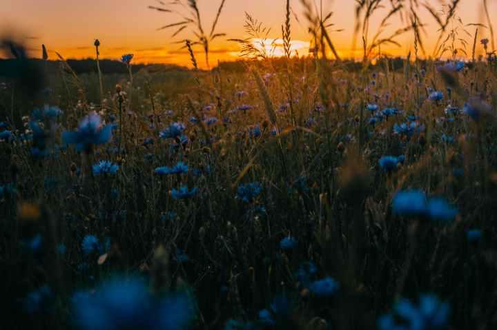 Where the WildflowersDanced